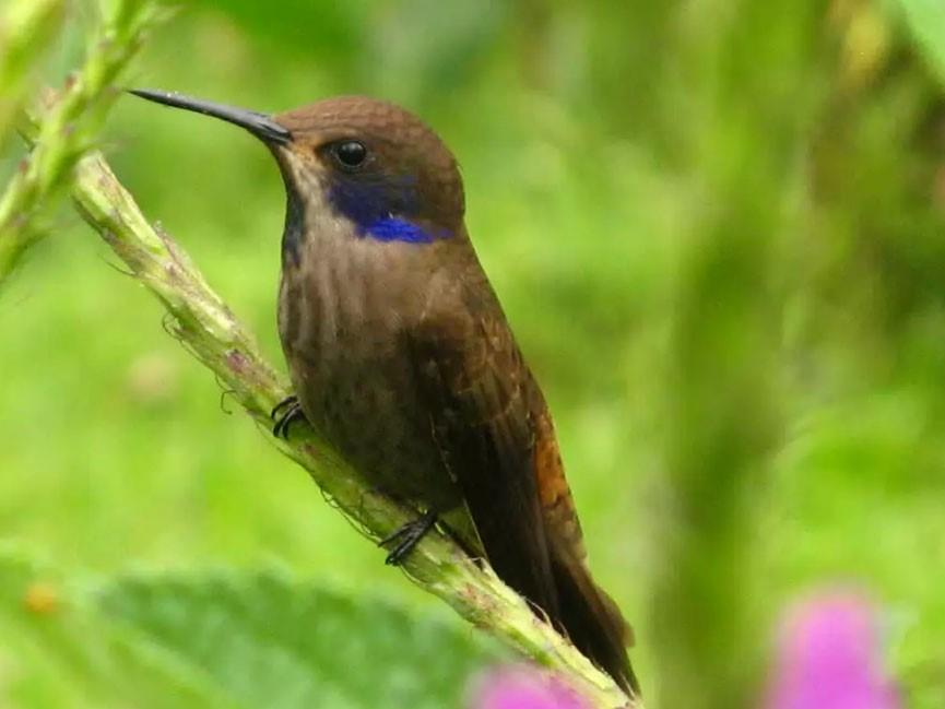 Birds Waching Costa Rica