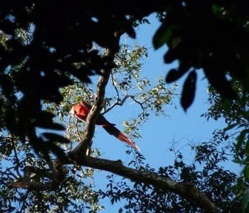 zip line adventuretours red macaw