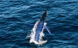 Jaco Costa Rica Fishing