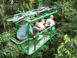 Rainforest Tram - Canopy