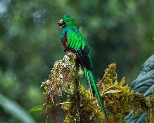 Resplendent Quetzal San Jose Tour