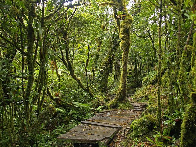 Reserva Biológica de Monteverde